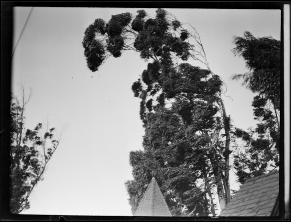 Trees blowing over studio cat, Southern California, 1930