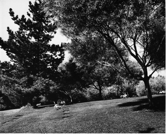 Trees creating shadows and flat headstones in the Forest Lawn Memorial Park