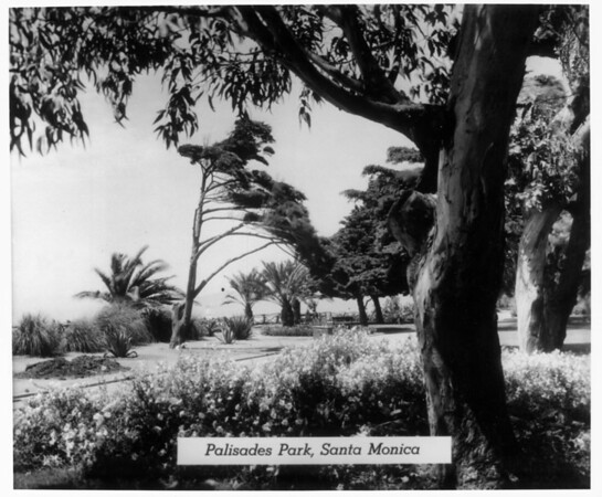A view of the landscape in Palisades Park
