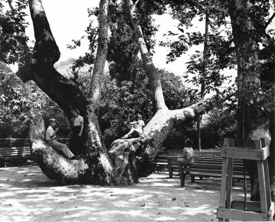 Children gathered around a large tree in a park