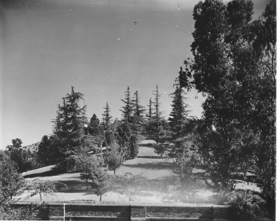 View of the trees and landscape at Forest Lawn Memorial Park