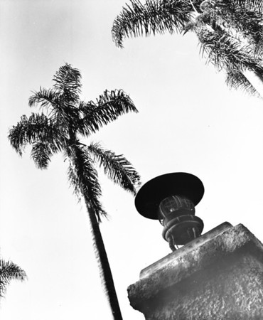 A lantern and palm trees at the Japanese Gardens in Hollywood