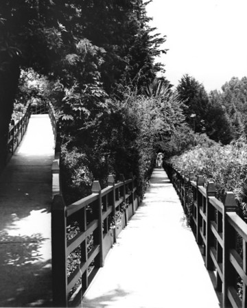 A walkway through a park