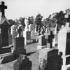 A crowd of headstones