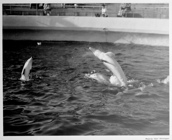 Marineland dolphin performance