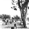 Picture of children playing in one of Los Angeles' many playgrounds