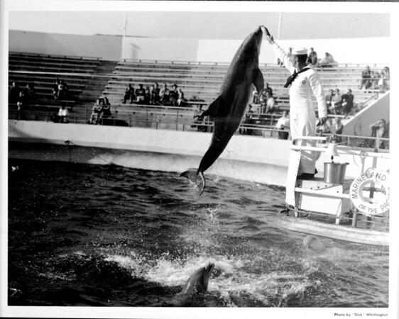 Marineland dolphin performance, feeding the dolphins