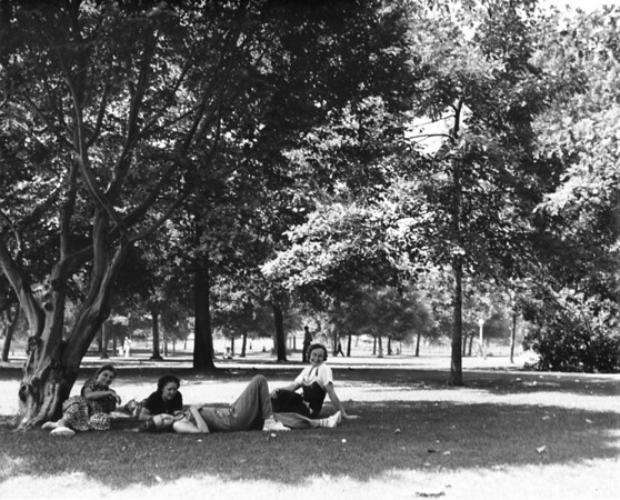 A group of women relaxing in the shade of a tree filled park