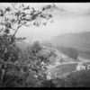 Shots among oak trees over Cahuenga Pass, 3305 Cahuenga Avenue, Los Angeles, CA, 1927
