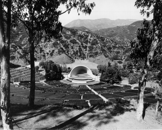 Looking down on the Hollywood Bowl from a stand of Eucalyptus trees
