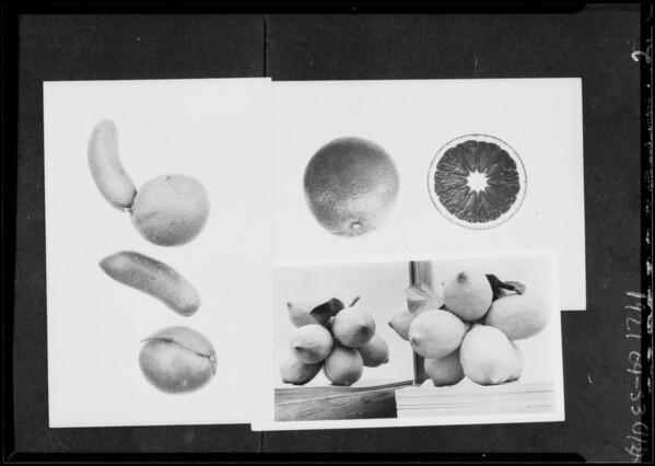 Fresh fruit, Valencia orange show, Southern California, 1927