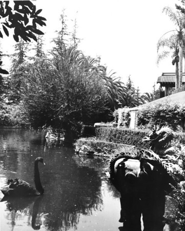A view of a lake in the Japanese gardens with an ornamental sculpture and a swan
