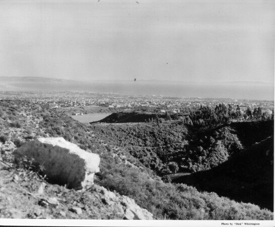 The Santa Monica Bay skyline from a wooded hills area