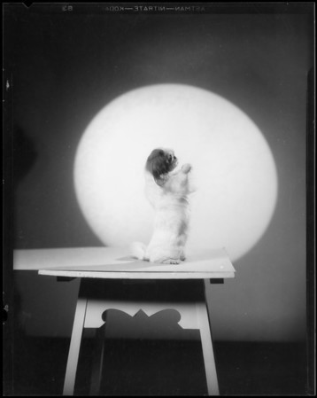 Christmas cards for the Pierces, silhouettes etc with dog, Southern California, 1934