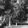Photo of a woman standing among many trees within a city park in Los Angeles County