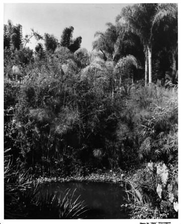 Oakley's home, gardens, fish pond, private gardens from 1940-41