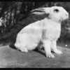 Easter rabbits and Helen Ferguson, Southern California, 1927