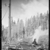 Logging, Union Oil Co., Southern California, 1932