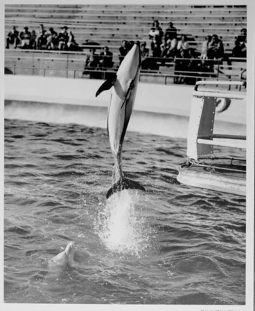 Marineland dolphin performance