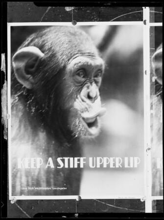 """Keep a Stiff Upper Lip"", Southern California, 1932"