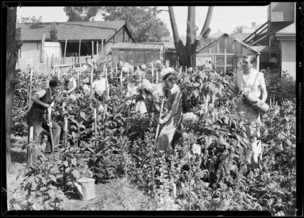Children working in dahlia flower bed, Southern California, 1933