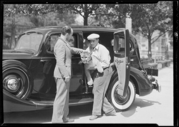 Lion and packard, Southern California, 1935