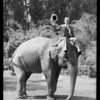Riding elephant, Selig's Zoo, Southern California, 1932