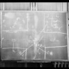 Blackboard, Mayers vs. Clay, Superior Court, Pasadena, CA, 1932