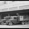 Blue Diamond Produce Co. trucks, Southern California, 1932