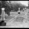 Citrus smudge pots, Southern California, 1928