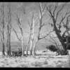 Desert scenes near Bishop, CA, 1927
