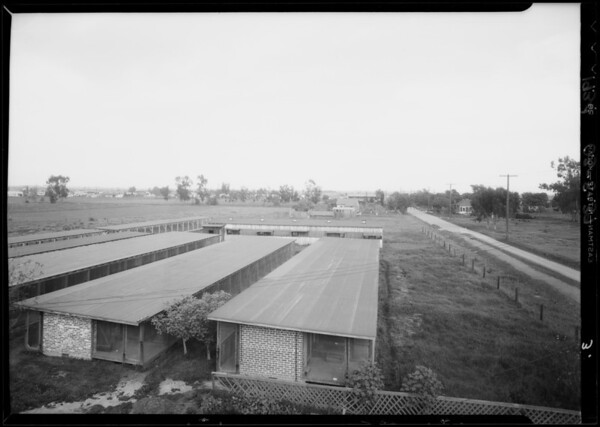 Chinchilla farm, Southern California, 1934