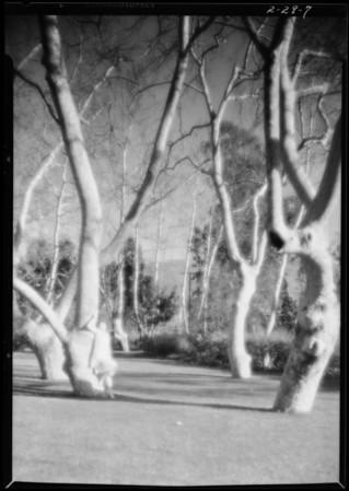 Homes at Gainsborough Heath, Southern California, 1928