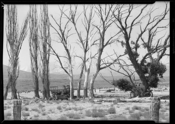 Desert scenes near Bishop, CA, 1927