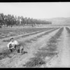 Small farm, Camarillo, CA, 1927