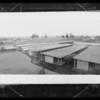 Mink farm, Southern California, 1934