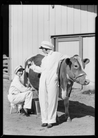 Milking contest for Warner Bros. Theatre (Adohr Dairy), Southern California, 1932