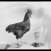 Poultry and rabbit show, Southern California, 1927
