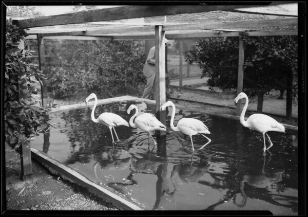 Altadena Aviary, Altadena, CA, 1927