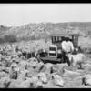 Chevrolet & sheep in Mockingbird Canyon, Southern California, 1926