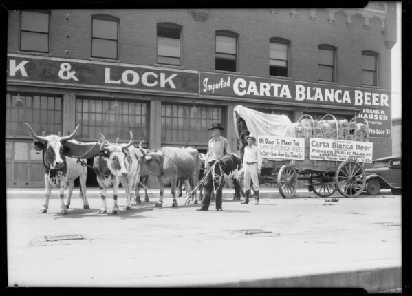 Oxen team, Frank M. Houser, Carta Blanca Beer, Southern California, 1933