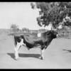 La Lomita Rancho, Lomita, CA, 1925