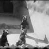 San Diego Zoo, San Diego, CA, [s.d.]