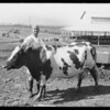 Cattle, Southern California, 1927