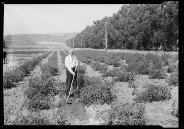 Small farm, Camarillo, CA, 1927