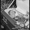 Mrs. Sundberg, deceased, Southern California, 1933