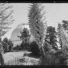 Mt. Wilson Observatory & yuccas, Los Angeles, CA, 1935