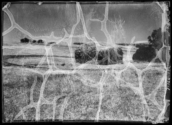 Ranch scenes, hay, Southern California, 1935