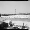 Wilcox Nursery, Montebello, CA, 1940
