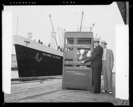 Prize bull being shipped to Ecuador aboard the Flying Cloud, Los Angeles, CA, 1940